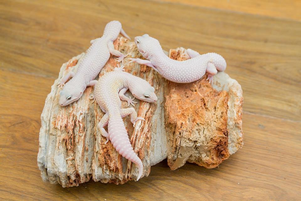 снимка на Mac snow Diablo blankoмъжки