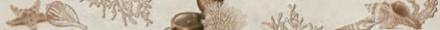 снимка на Декор плочка за баня TIME LISTELO CREAM ,x